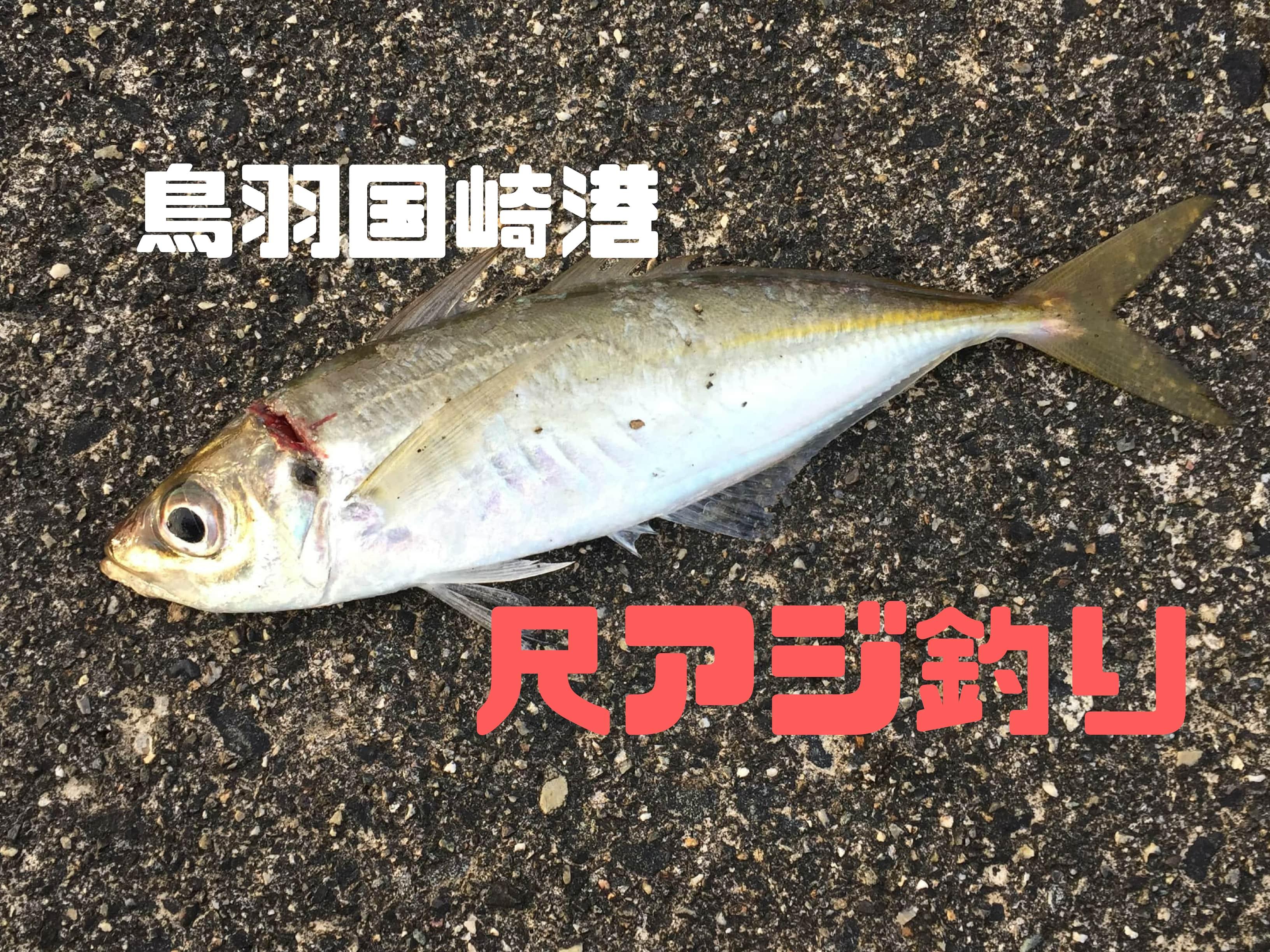 鳥羽国崎港で尺アジ釣り【メガアジ・ギガアジ・テラアジ】