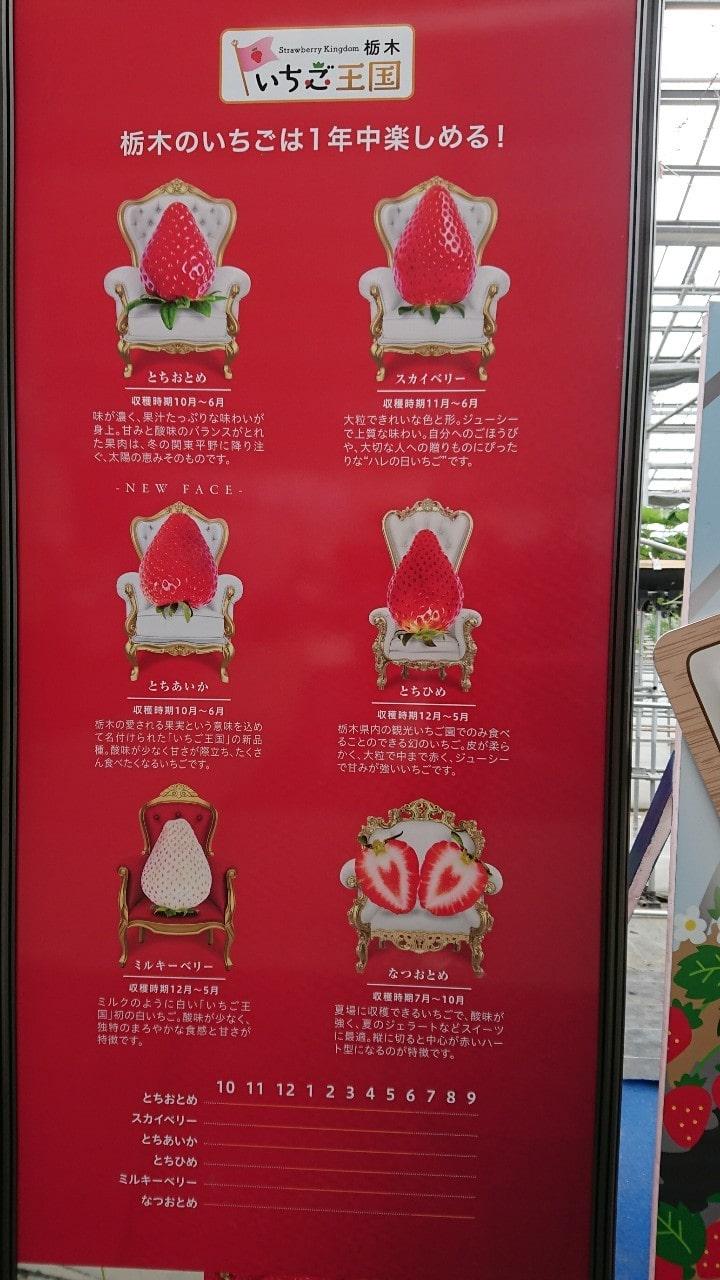 車中泊で行く栃木県のB級グルメとB級スポットをご紹介【秘密のケンミンSHOW】